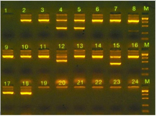 Oragene DNA gel