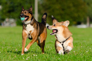 Multiomics methods investigate aging process in dogs